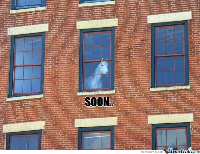 Soon-Horse-Looking-From-Window_o_112184.jpg